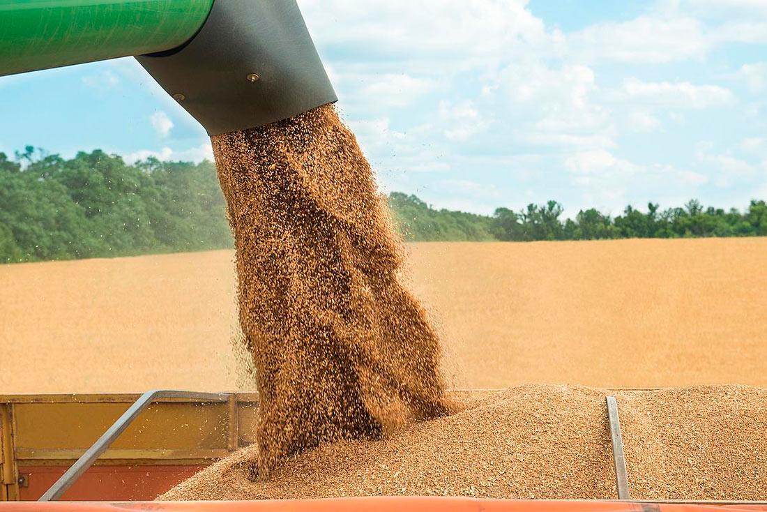 Правительство прогнозирует снижение урожая зерновых