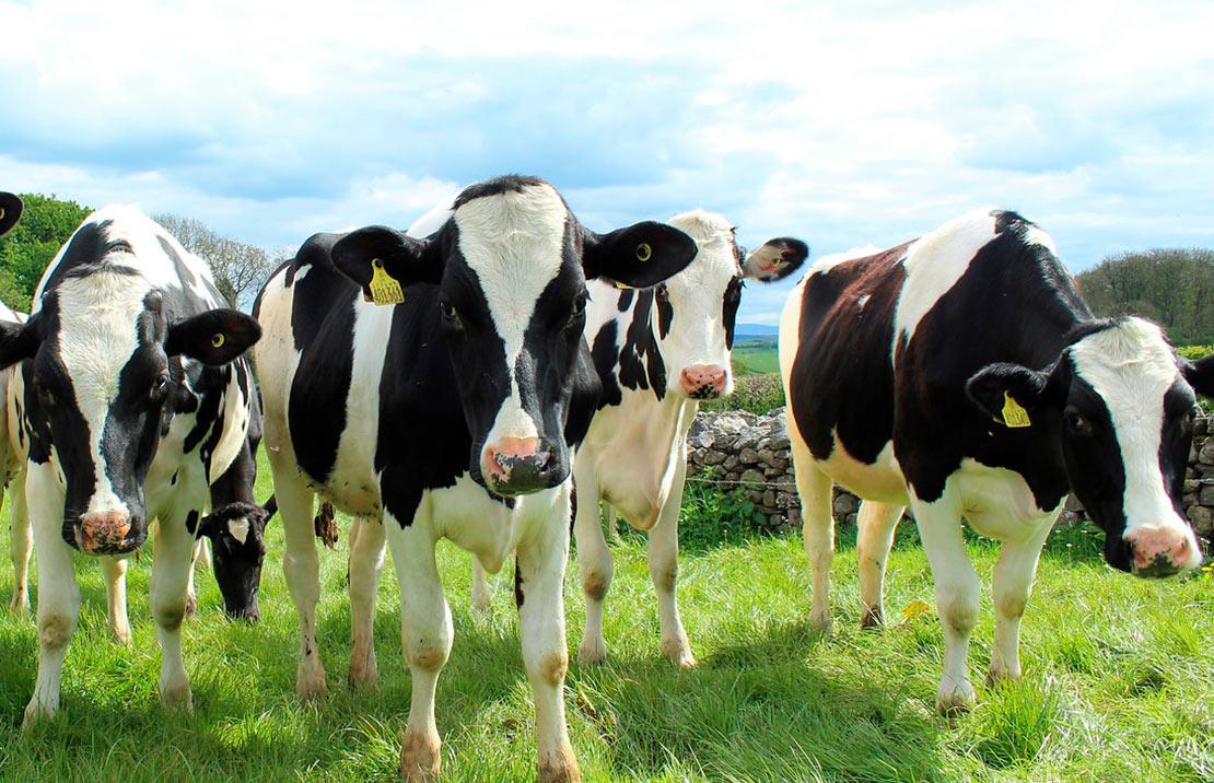 Мінекономіки вирішило надати відшкодування за племінну худобу