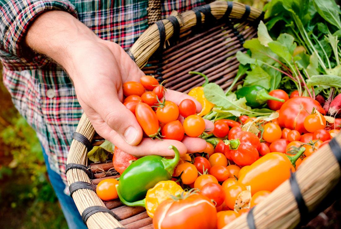 Навесні запрацює реєстр органічних виробників