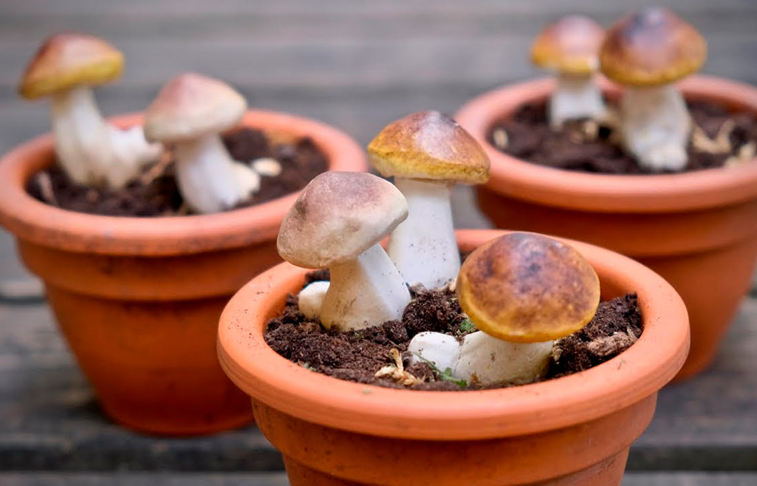 WikiHow: Как выращивать грибы в домашних условиях (ГРАФИКА)