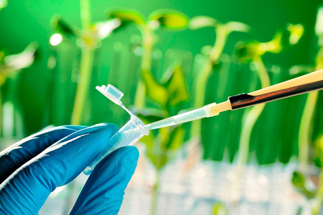 За неправильное обращение с ГМО могут ввести штраф