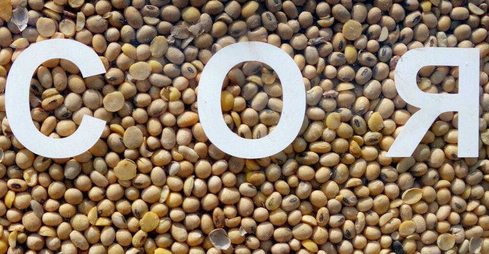 Соя: шаноба для «золотих бобів»