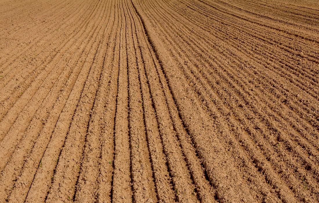 Стало известно, сколько сельхозземель зарегистрировал госгеокадастр