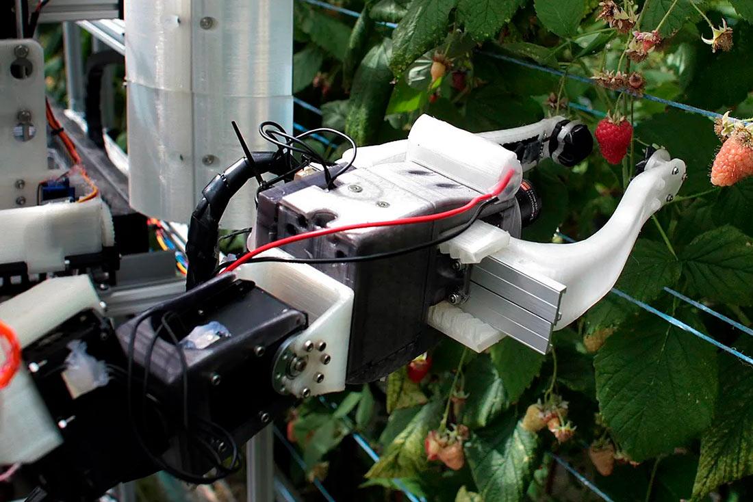 Tortuga: Сотни роботов заменят сборщиков урожая