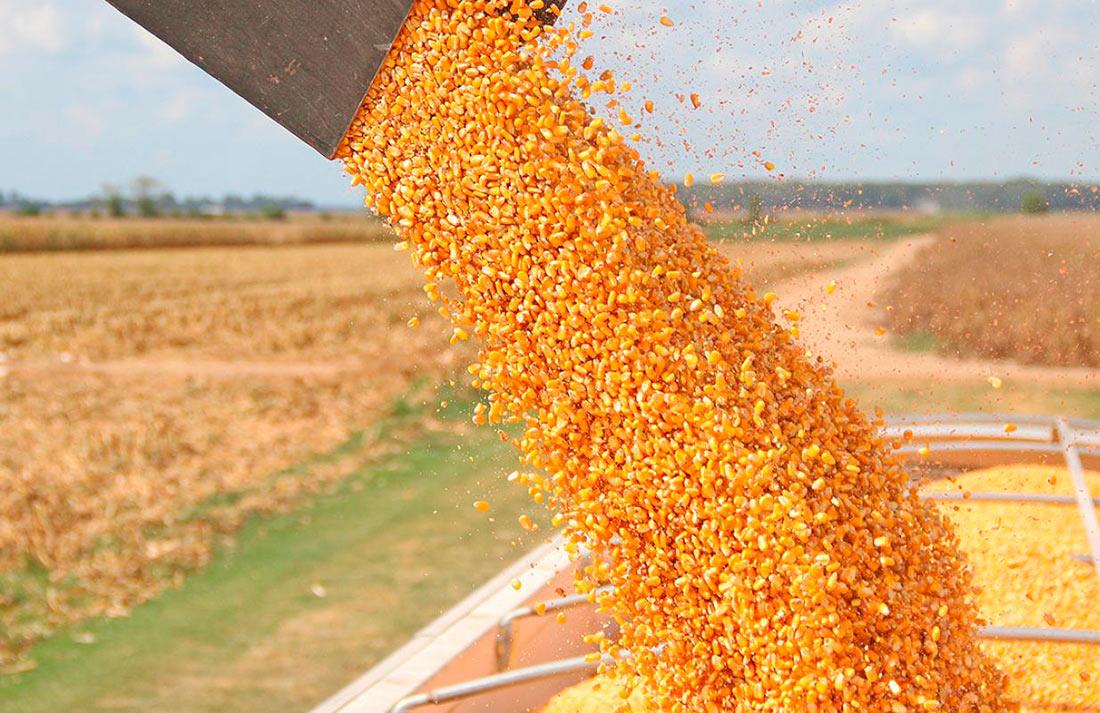 Стало известно, сколько зерновых отправили на экспорт: появились новые цифры