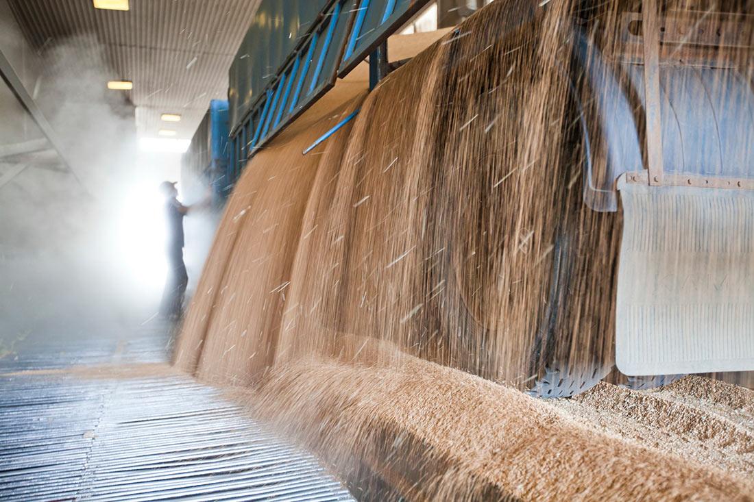Українська зернова асоціація оприлюднила дані, скільки насправді експортуємо зерна