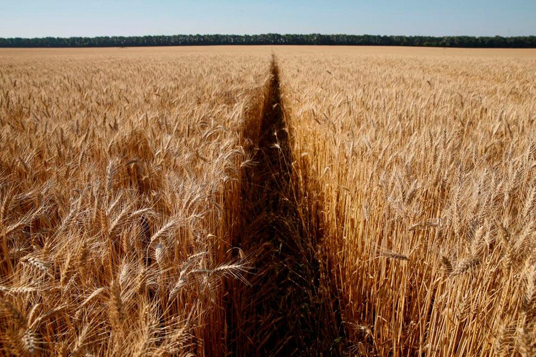 УЗА пророчит урожай зерновых
