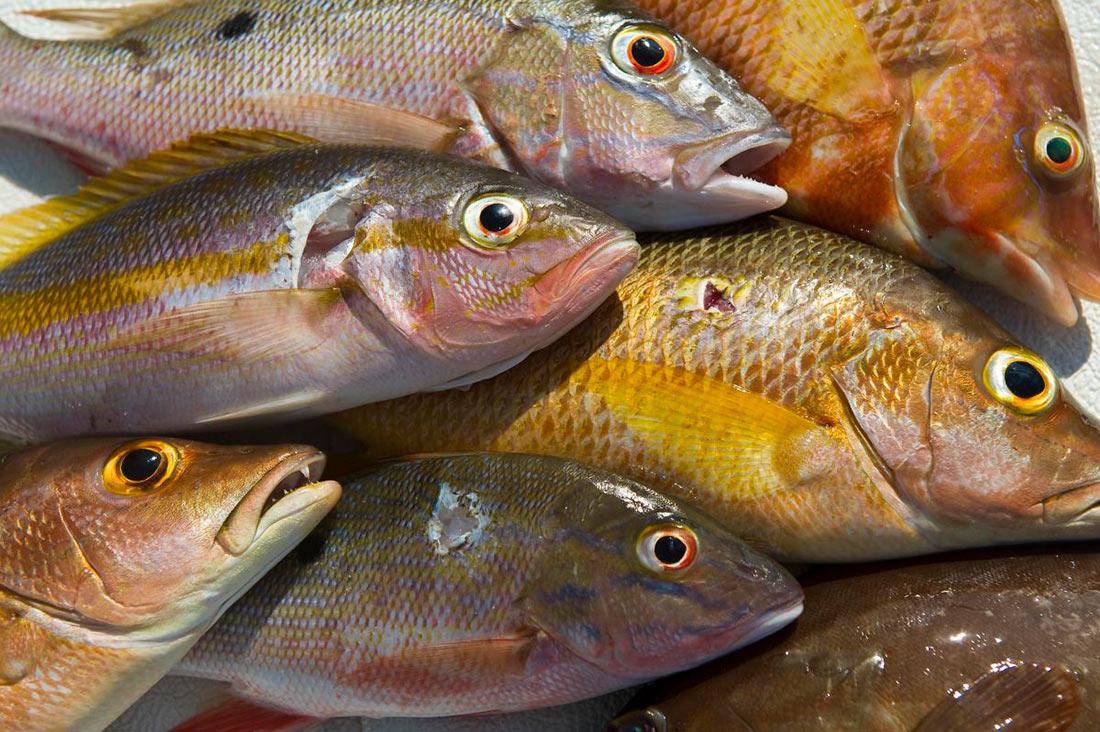Украина стала поставлять больше рыбы на внешние рынки