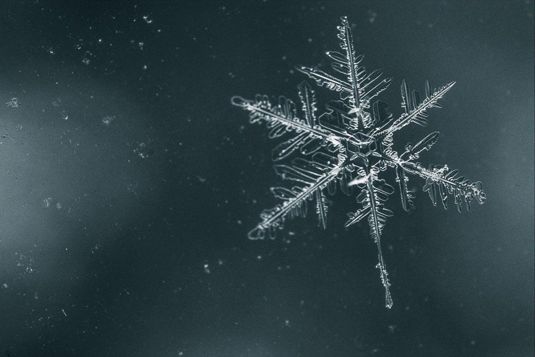 Бактерии, не допускающие образования льда, могут защитить культуры от заморозков