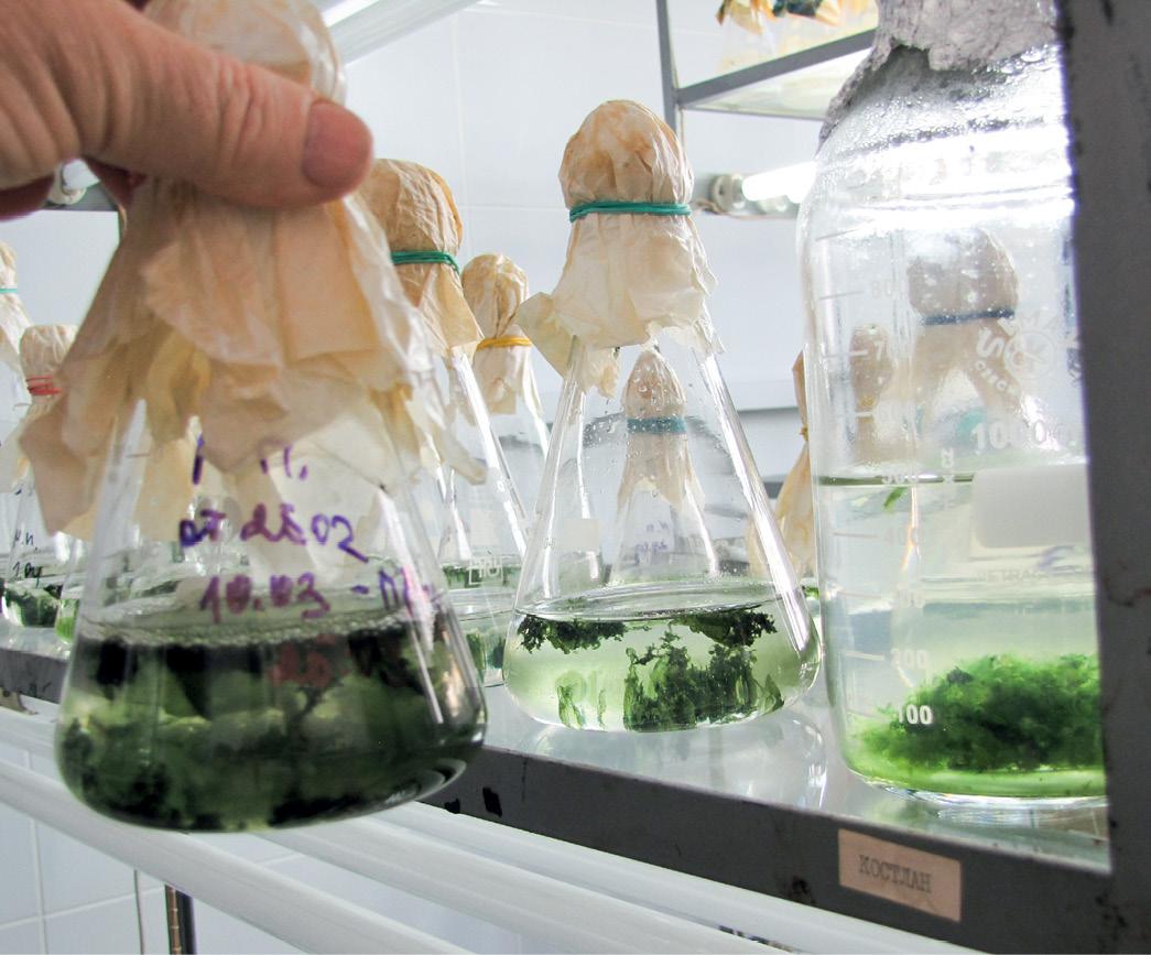 Азотфіксуючі водорості: технологія в500кінських сил
