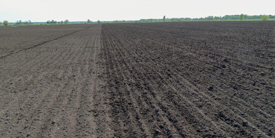 Пшениця на переущільненому ґрунті