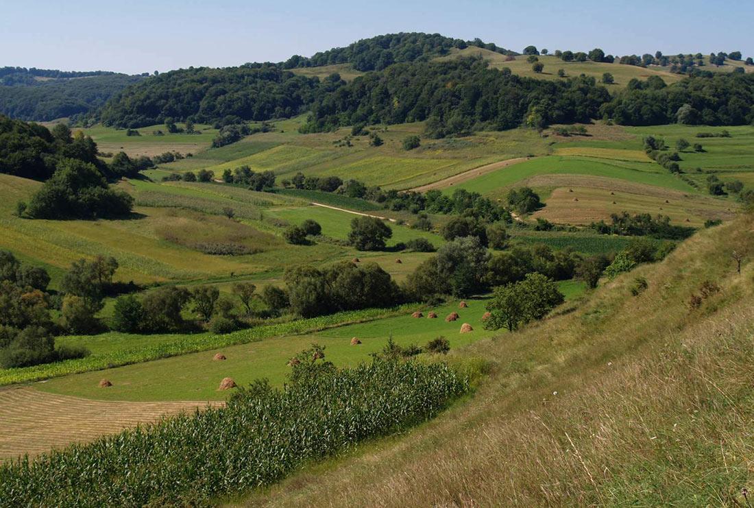 Немецкие ученые предложили альтернативу органическому сельскому хозяйству