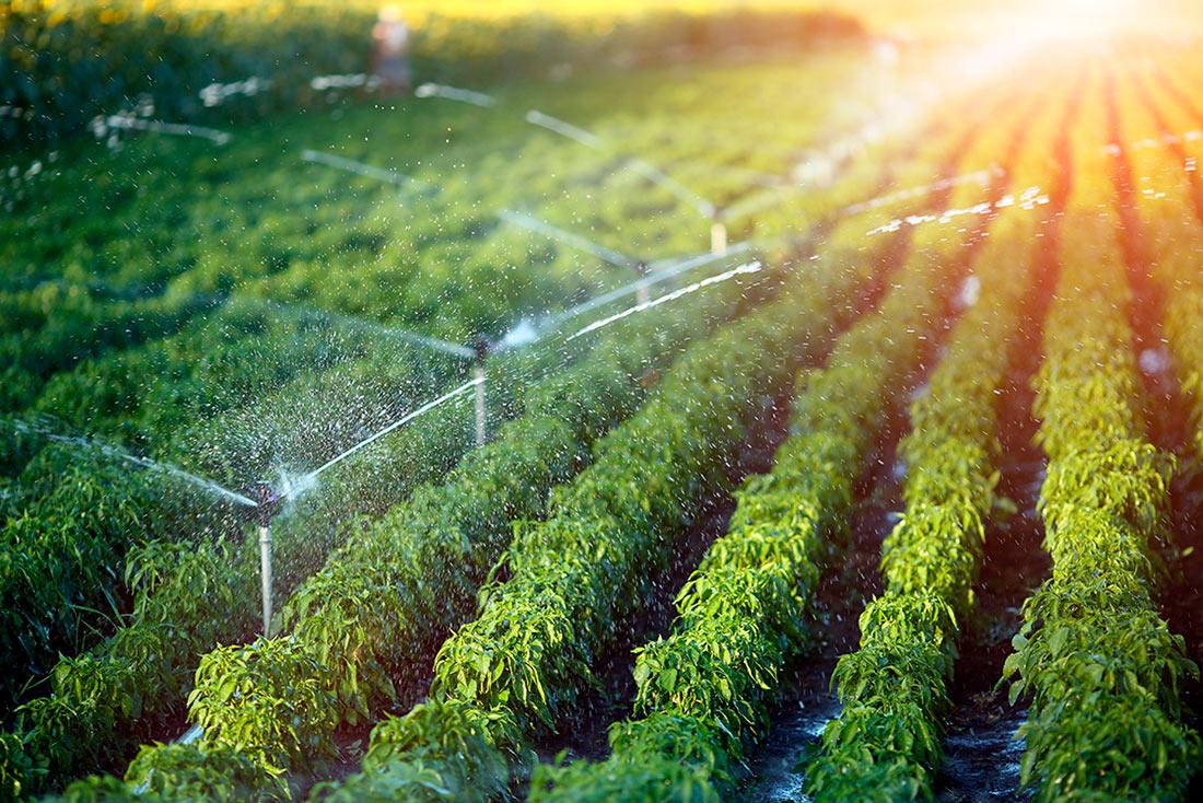 Створити систему зрошення агроземель Україні допоможе Світовий банк