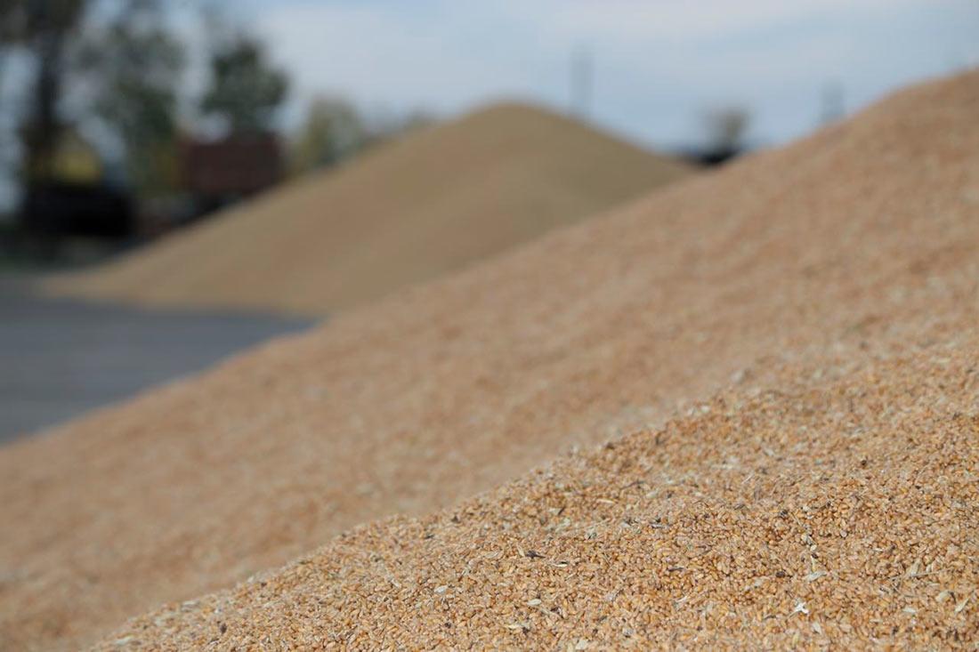 Три галузеві організації хочуть відкликати погодження Меморандуму про експорт зерна
