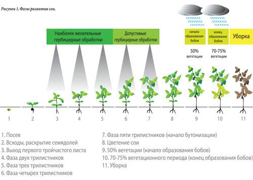 вегетационного периода что это