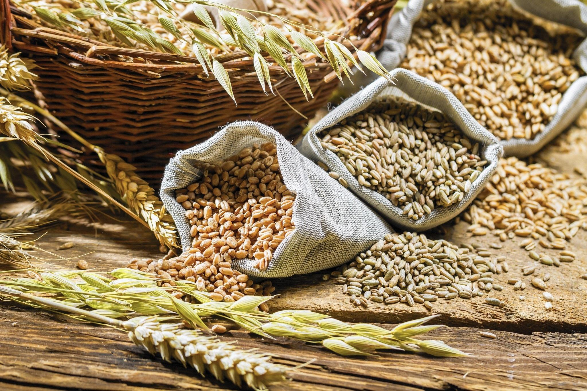 Рациональное зерно: прогноз урожая