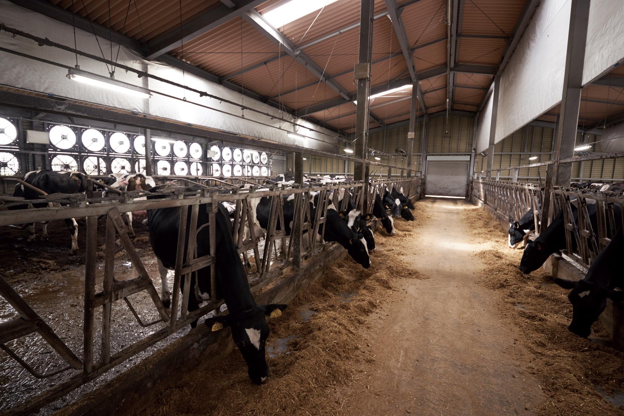 Умный дом для коров