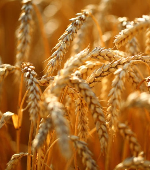 Зерно: хорошая цена, плохая цена