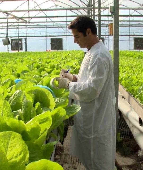 Новые критерии оценивания риска в сфере карантина растений
