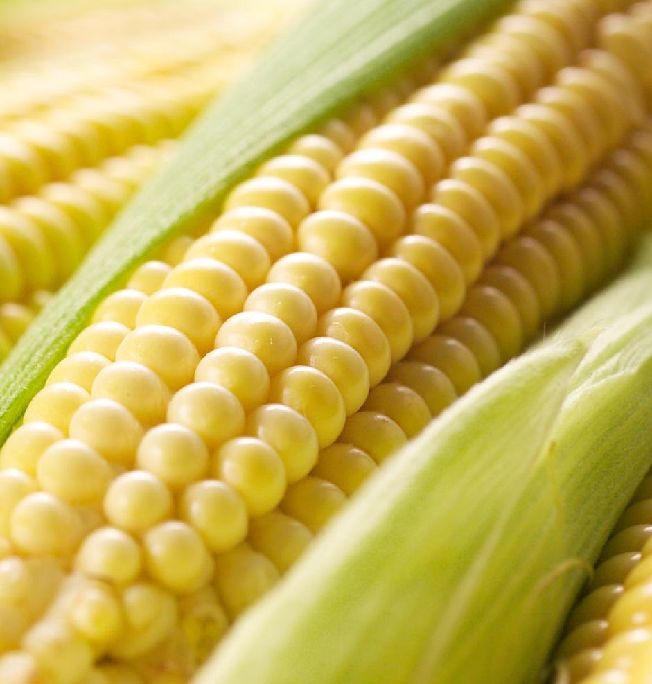 Китай отказывается закупать украинскую кукурузу