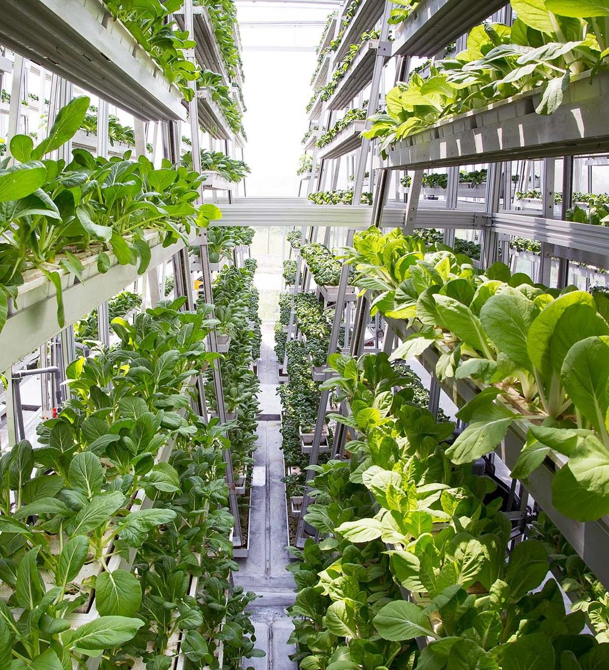 Вертикальные фермы: овощи и фрукты круглый год