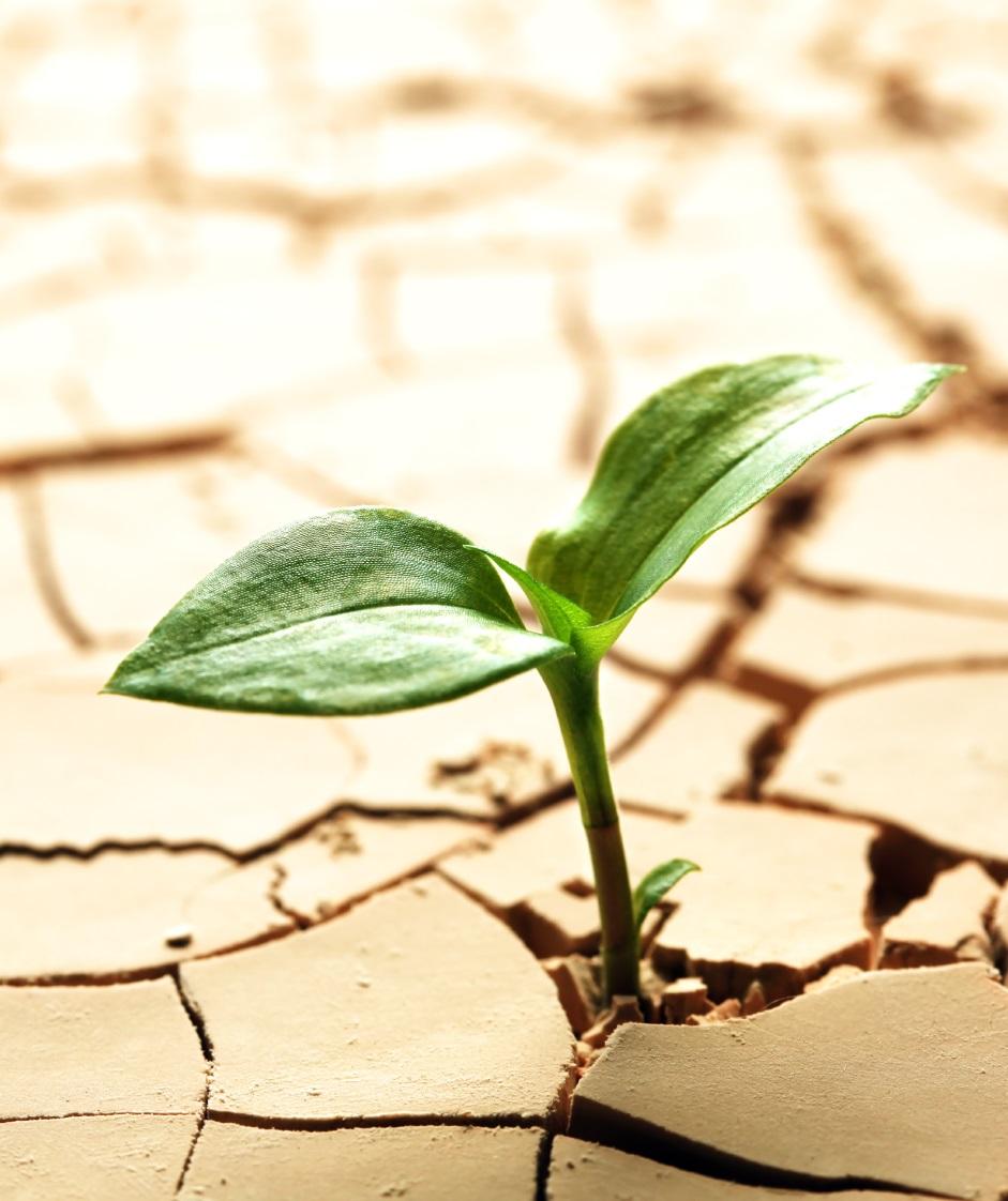 Засухоустойчивые растения — это реальность