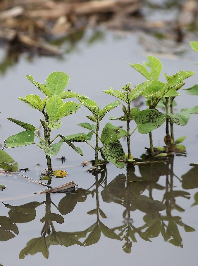 Обильные дожди вызывают заболевания у растений