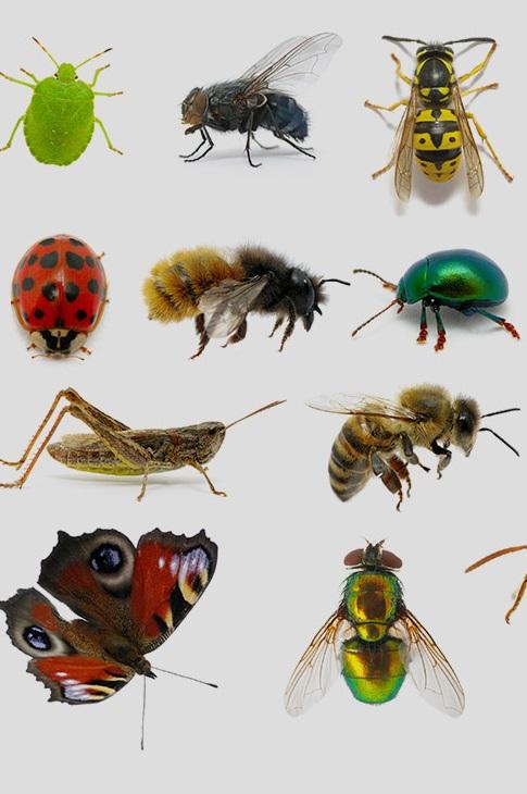 IR76b поможет осуществлять контроль роста популяции насекомых