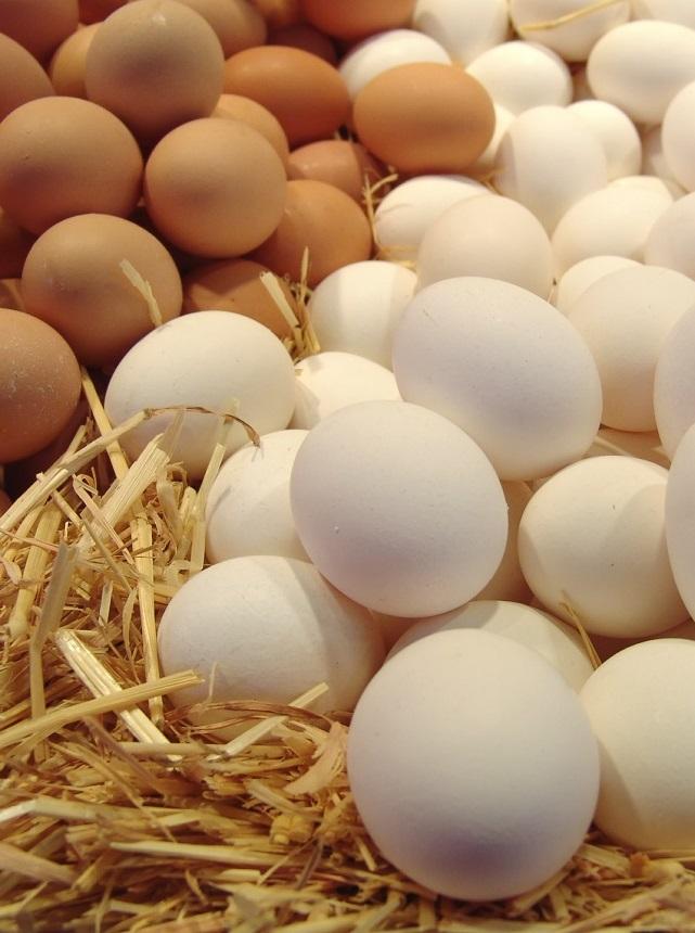 Экспорт яиц значительно сократился