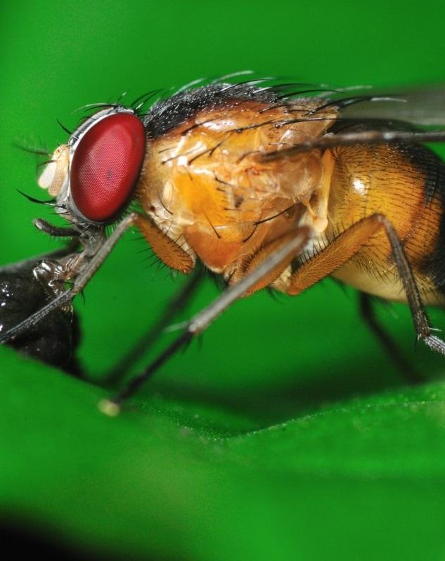 Ученые учатся контролировать рост популяции насекомых-вредителей