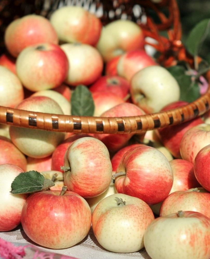 Украина ставит рекорды по яблочно-ягодному экспорту
