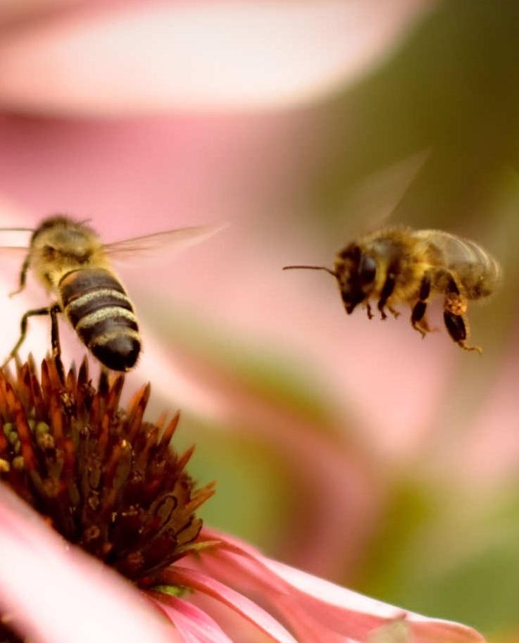 Пестициды стали причиной массовой гибели пчел