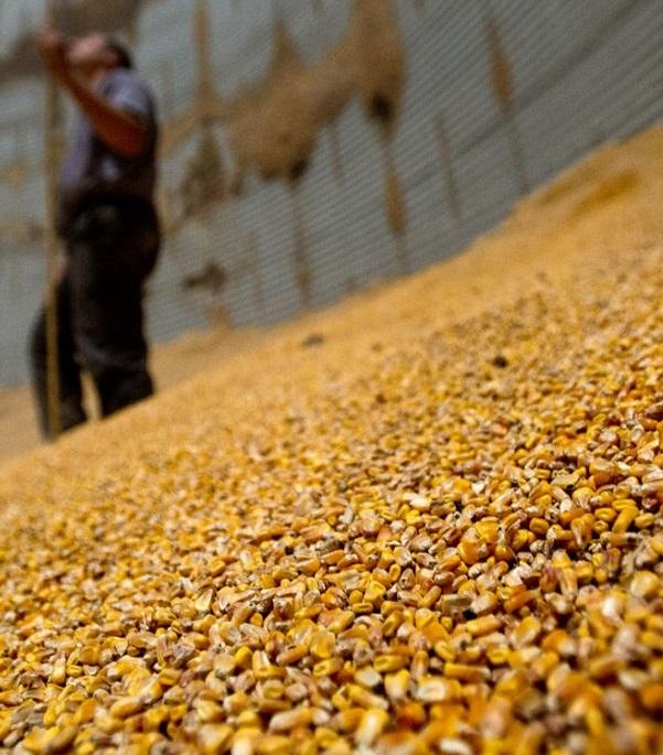 Украина активно экспортирует подсолнечное масло, кукурузу и пшеницу