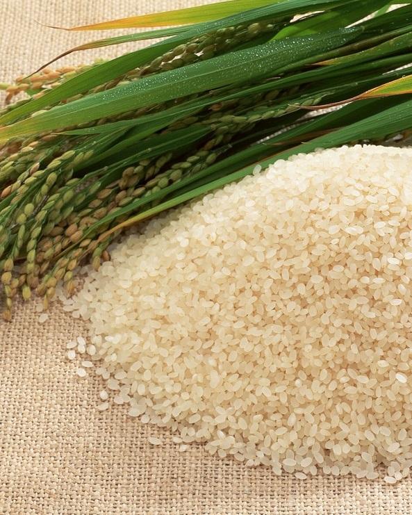 Институт риса НААН Украины представил новые технологии выращивания культуры