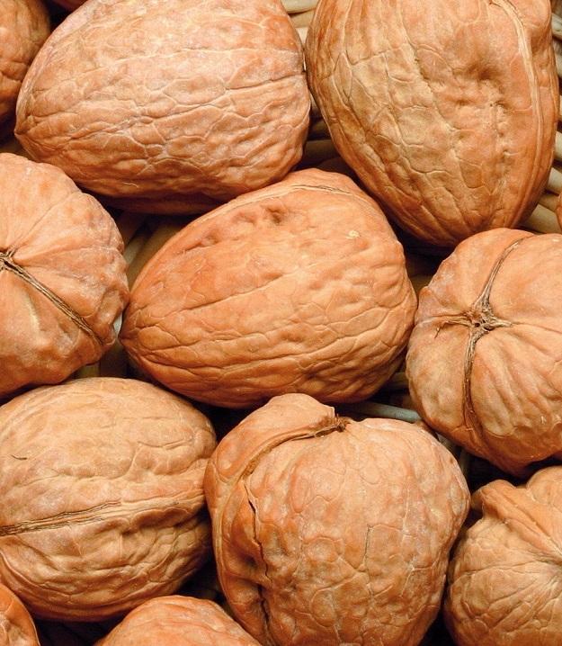 Промышленное производство грецкого ореха в Украине набирает силу