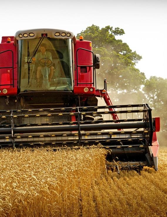 Уборка ранних зерновых подошла к финалу