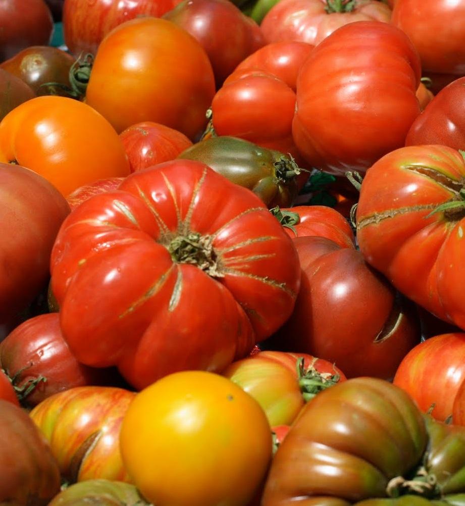 Ученые идентифицировали ген, влияющий на размер помидоров