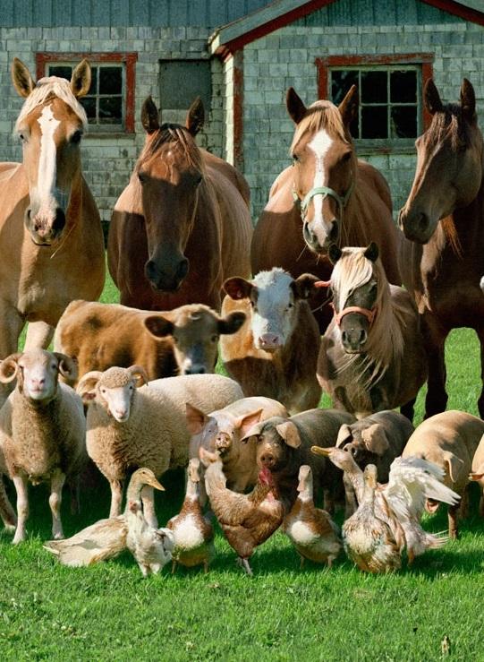 Rob MacInnis представил уникальную фотосессию домашних животных (ФОТО)