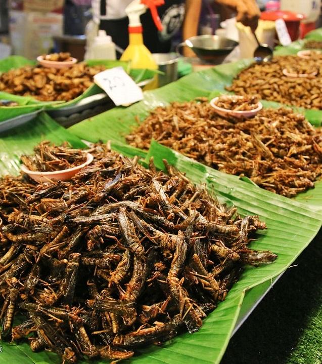 В Финляндии разрешили выращивать и продавать насекомых в качестве продуктов питания