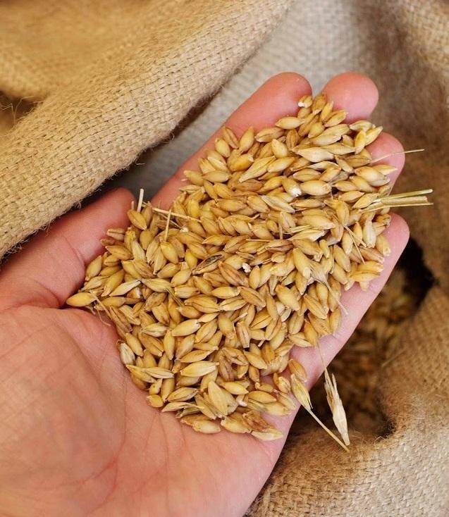 В Украине собрано 38,2 млн тонн зерна, большая часть площадей подготовлена под посев