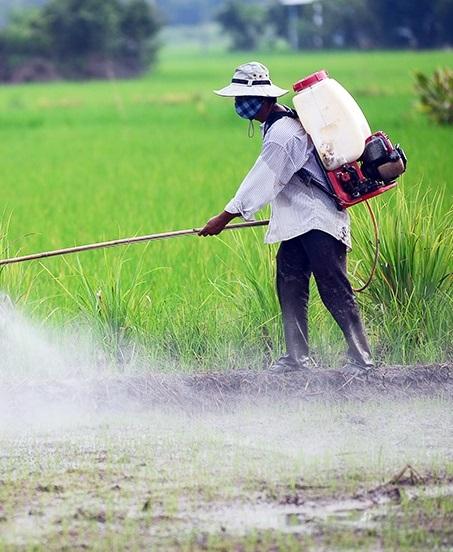 Китайские ученые разработали перерабатываемый пестицид