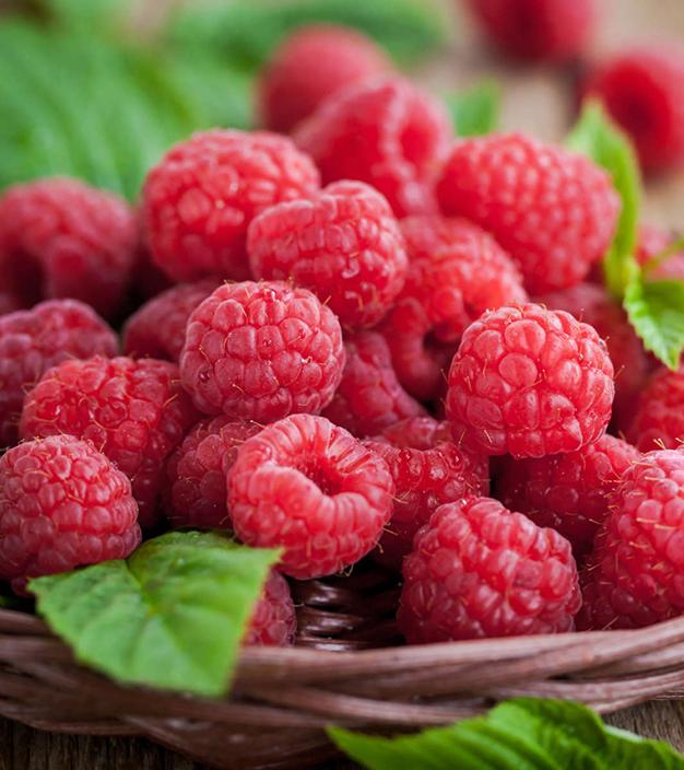 Украина может стать крупным ягодным экспортером