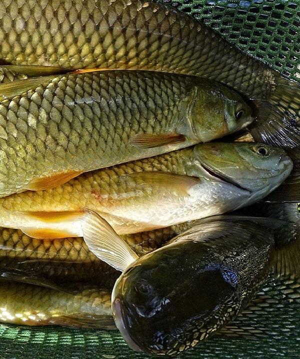 Вылов рыбы в режиме аквакультуры увеличился до 5 тыс. тонн