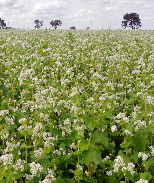 Объем урожая зерновых составил свыше 57 млн тонн