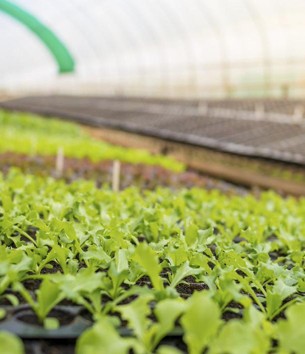 Теперь овощи можно выращивать круглогодично в любых климатических условиях