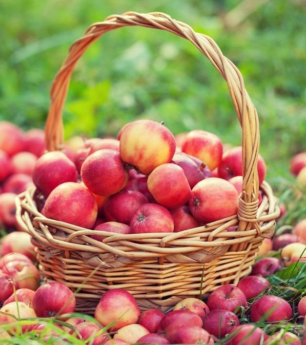 Эксперт поделился советами, как и куда можно экспортировать яблоки