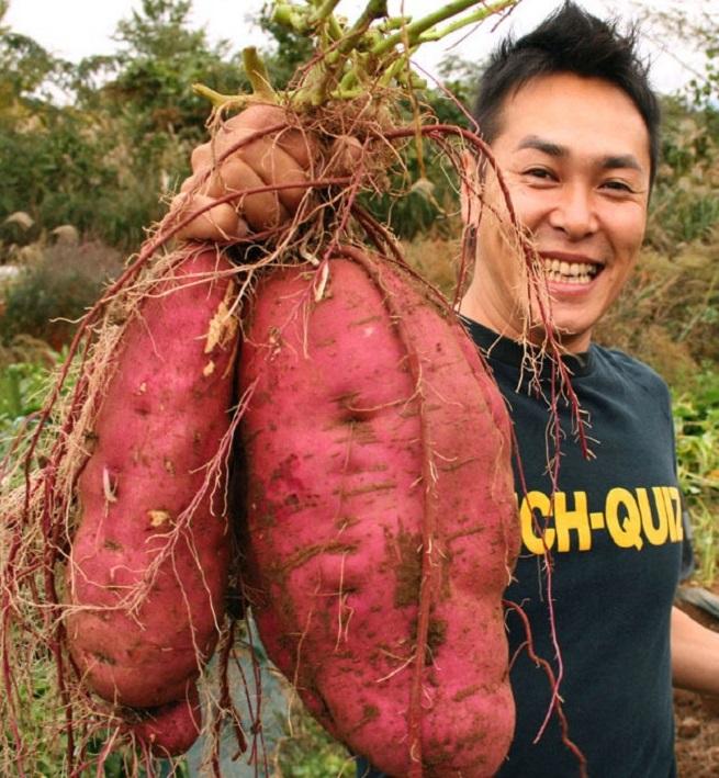 Фермер вырастил батат весом 40 килограммов