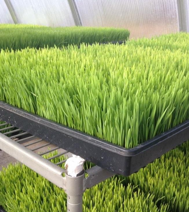 Применение углеродных нанотрубок ускоряет рост растений