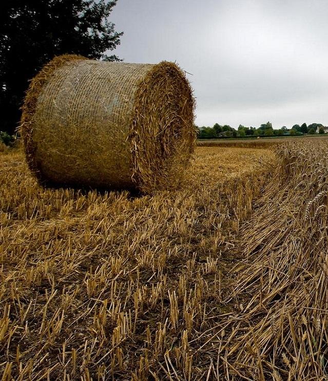Украина экспортировала более 20 млн тонн зерновых