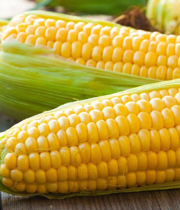Аналитика: с начала года выросли цены на кукурузу